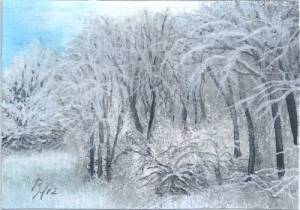 snow covered trees and bushes