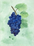 Pat Harrison painting of grapes